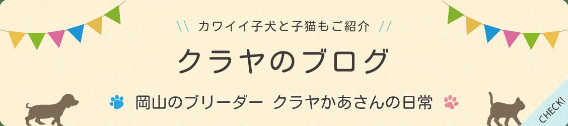 岡山のブリーダー クラヤかあさんの日常ブログ