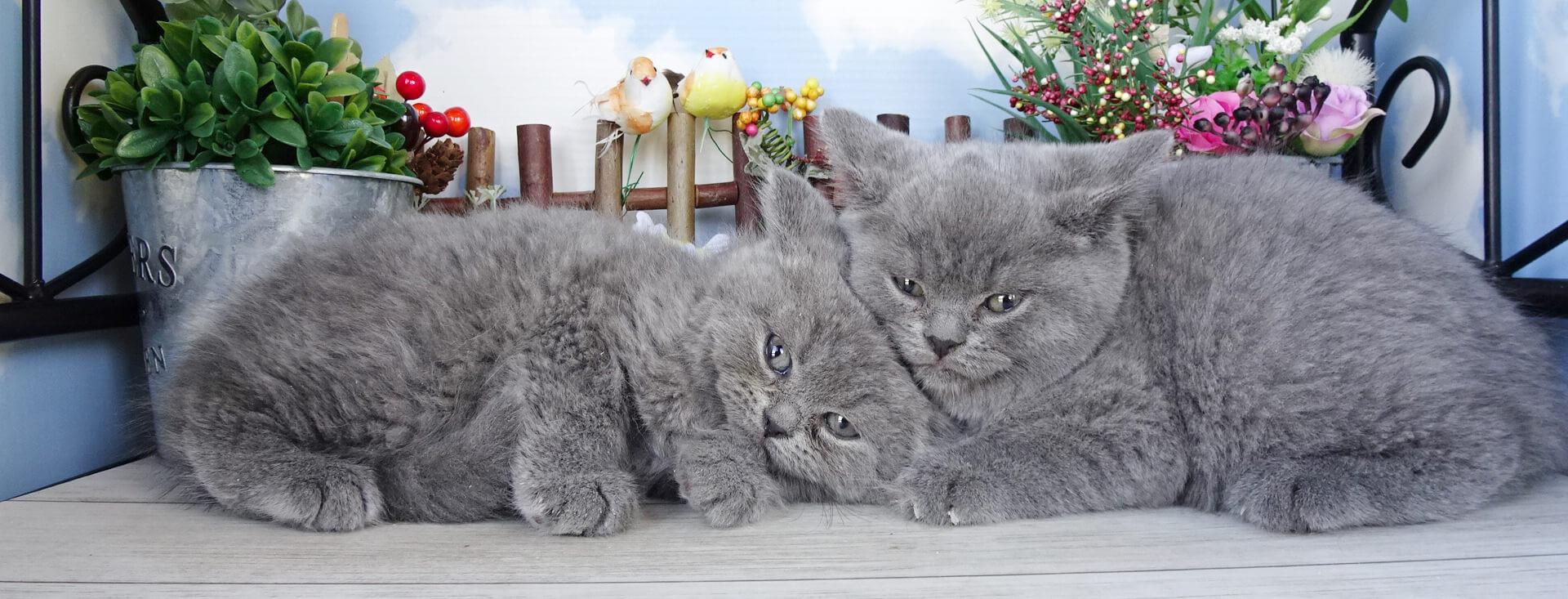 巣立った子猫たち