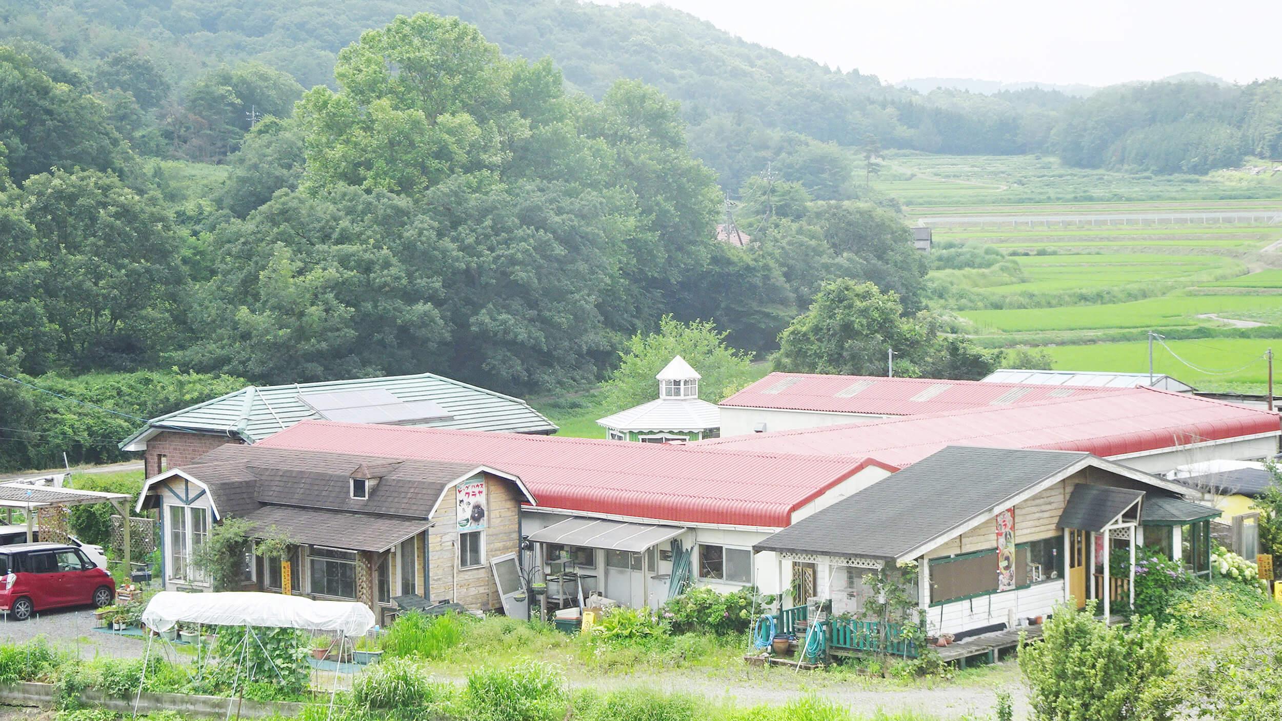 岡山の子犬・子猫ブリーダー クラヤの風景